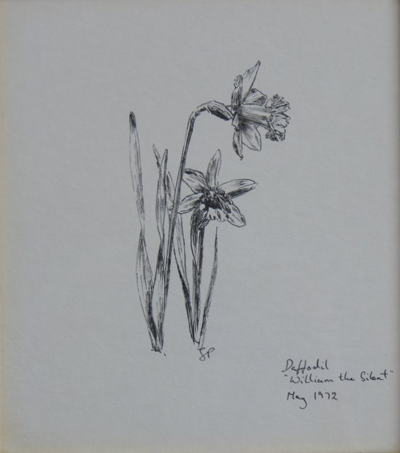 Daffodils ( William the Silent )