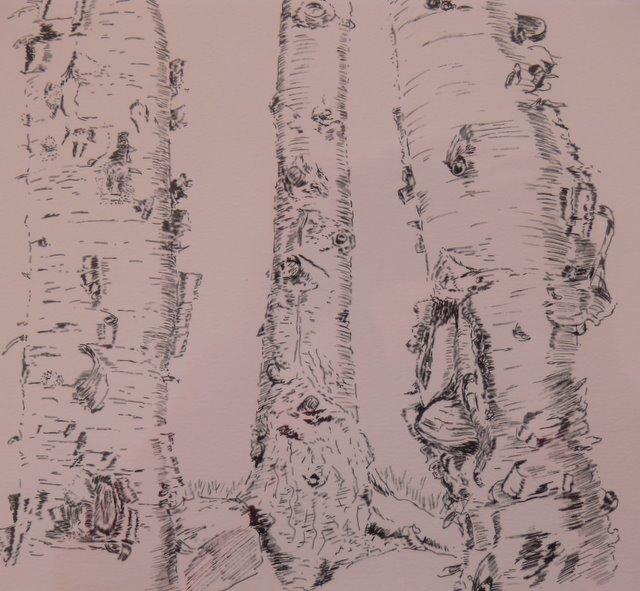 Bark on Birch Trees