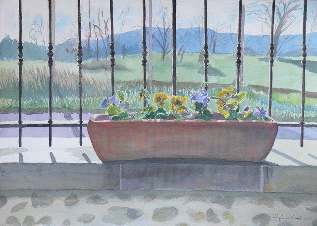 Winterflowering Pansies (unframed)