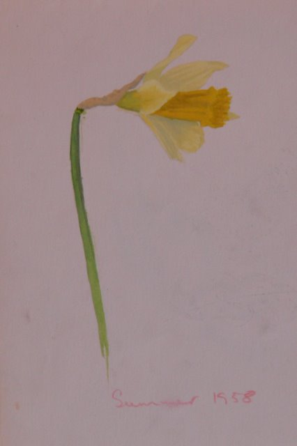 Daffodil (unframed) - SOLD