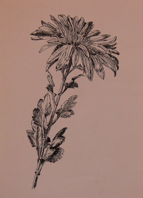 Chrysanthemum (unframed) - SOLD