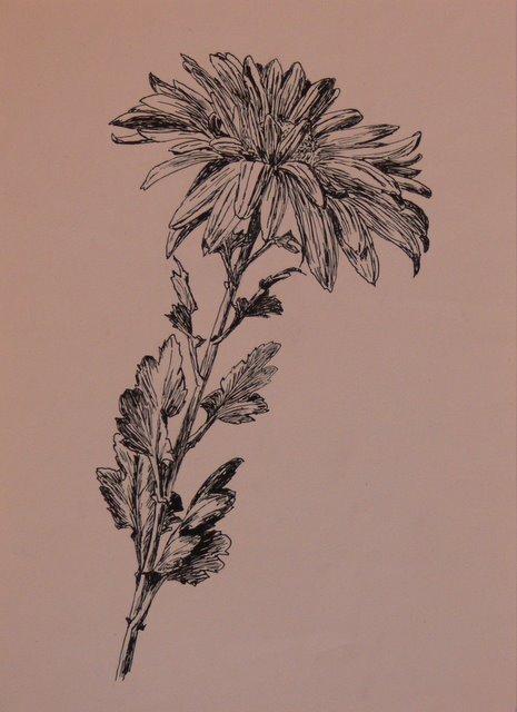Chrysanthemum (unframed) - SOLD