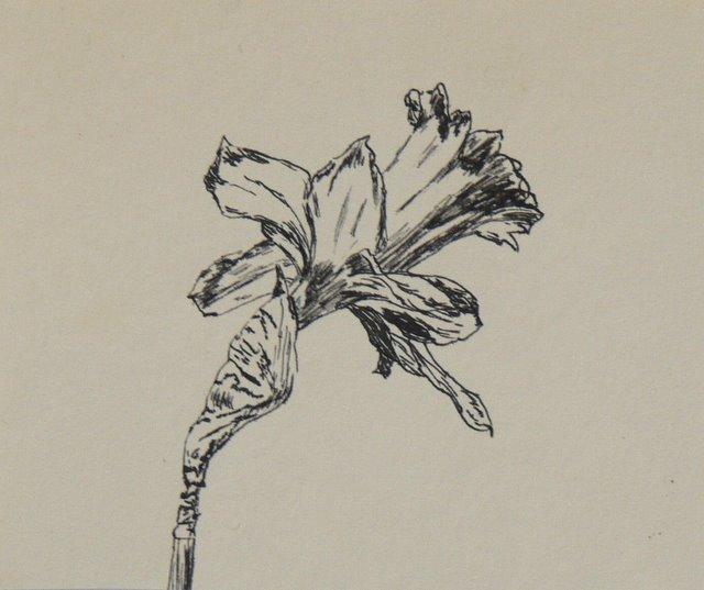 Daffodil (unframed) - SOLD