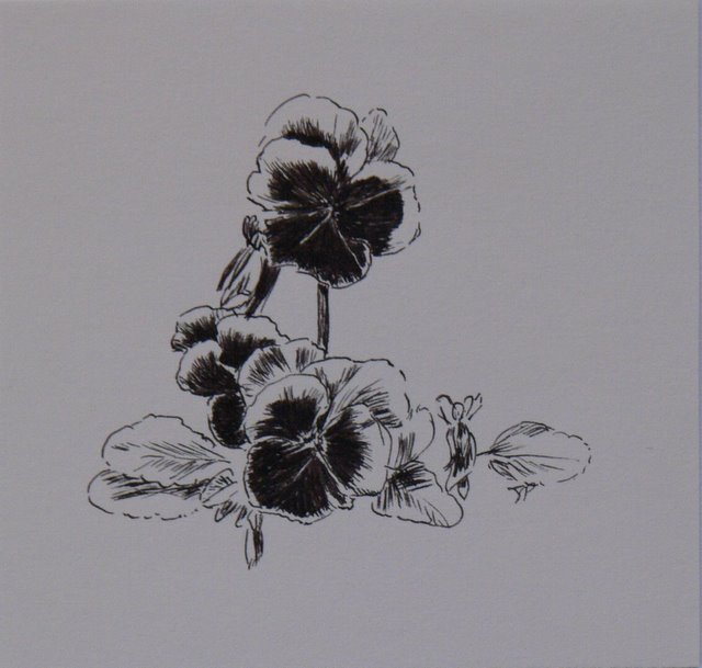 Pansies (unframed)