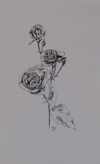Roses (unframed)