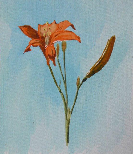 Orange Daylily on blue (unframed)