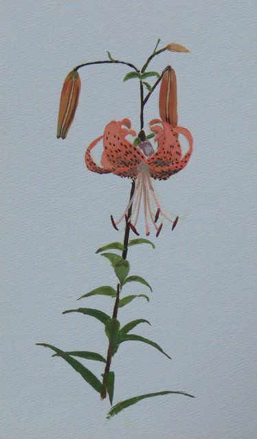 Orange Tigerlily (unframed) - SOLD