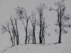 Trees on Skyline (unframed)