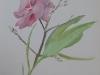 Oleander, Spain